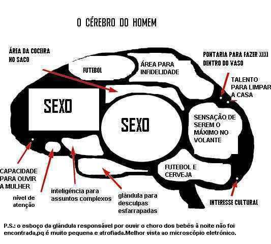 Piadas Do Molezza Cérebro Do Homen