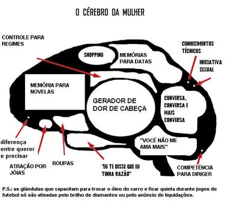 cerebro_feminino