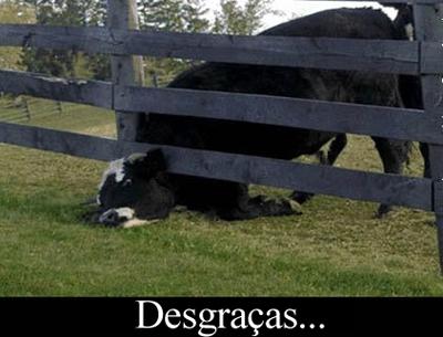 desgraca-1