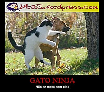 piras-gato-ninja