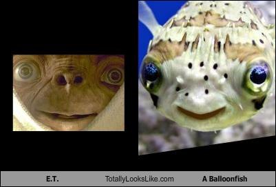 et-totally-looks-like-a-balloonfish
