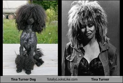 tina-turner-dog-totally-looks-like-tina-turner