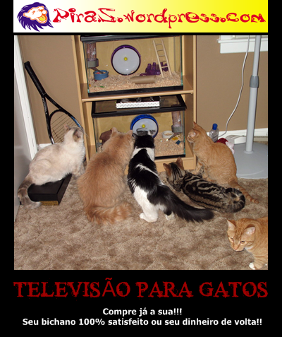 piras-placas motivacionais-tv-pra-gato