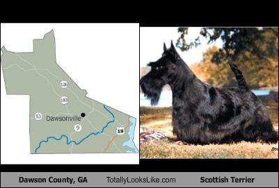 dawson-county-ga-totally-looks-like-scottish-terrier