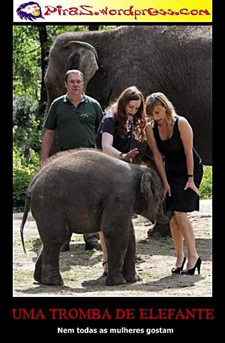 piras placas motivacionais uma tromba de elefante