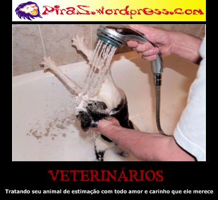 piras placas motivacionais veterinario