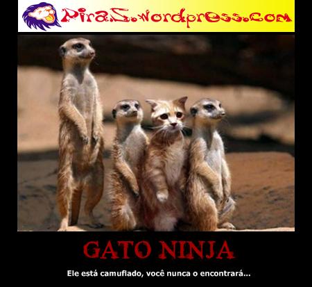 piras placas motivacionais gato ninja