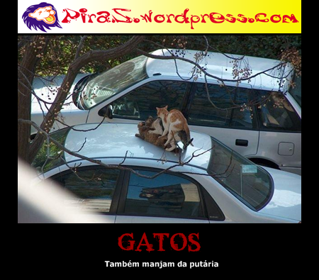 piras placas motivacionais gatos
