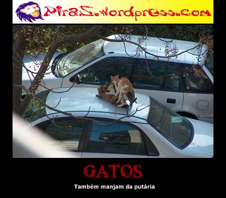 piras placas motivacionais gatos